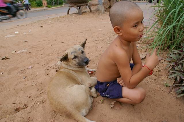 カンボジア 眉毛犬 タケオゲストハウス