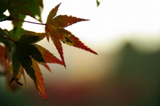 京都 嵐山の紅葉