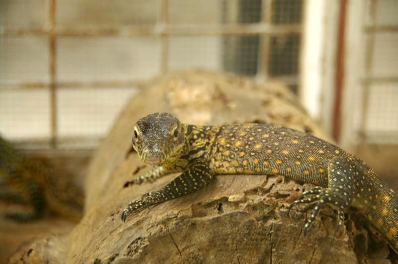 スラバヤ surabaya 動物園 観光