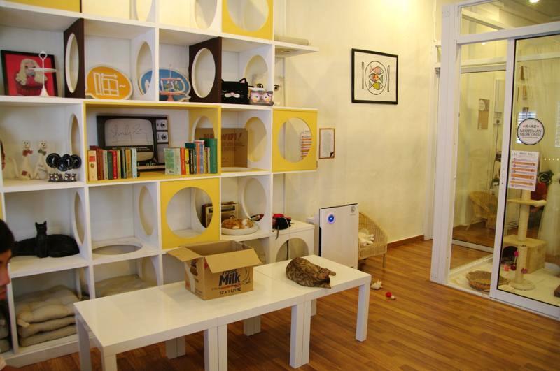 ペナン 猫カフェ ジョージタウン 猫之屋 PURRFECT CAT CAFE