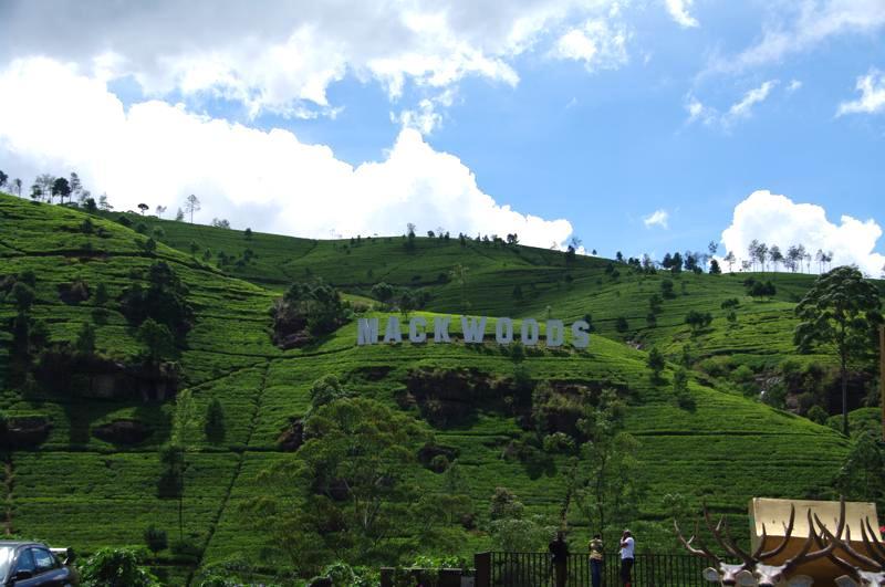 スリランカ ヌワラエリヤ 茶畑 マックウッズ Macwoods