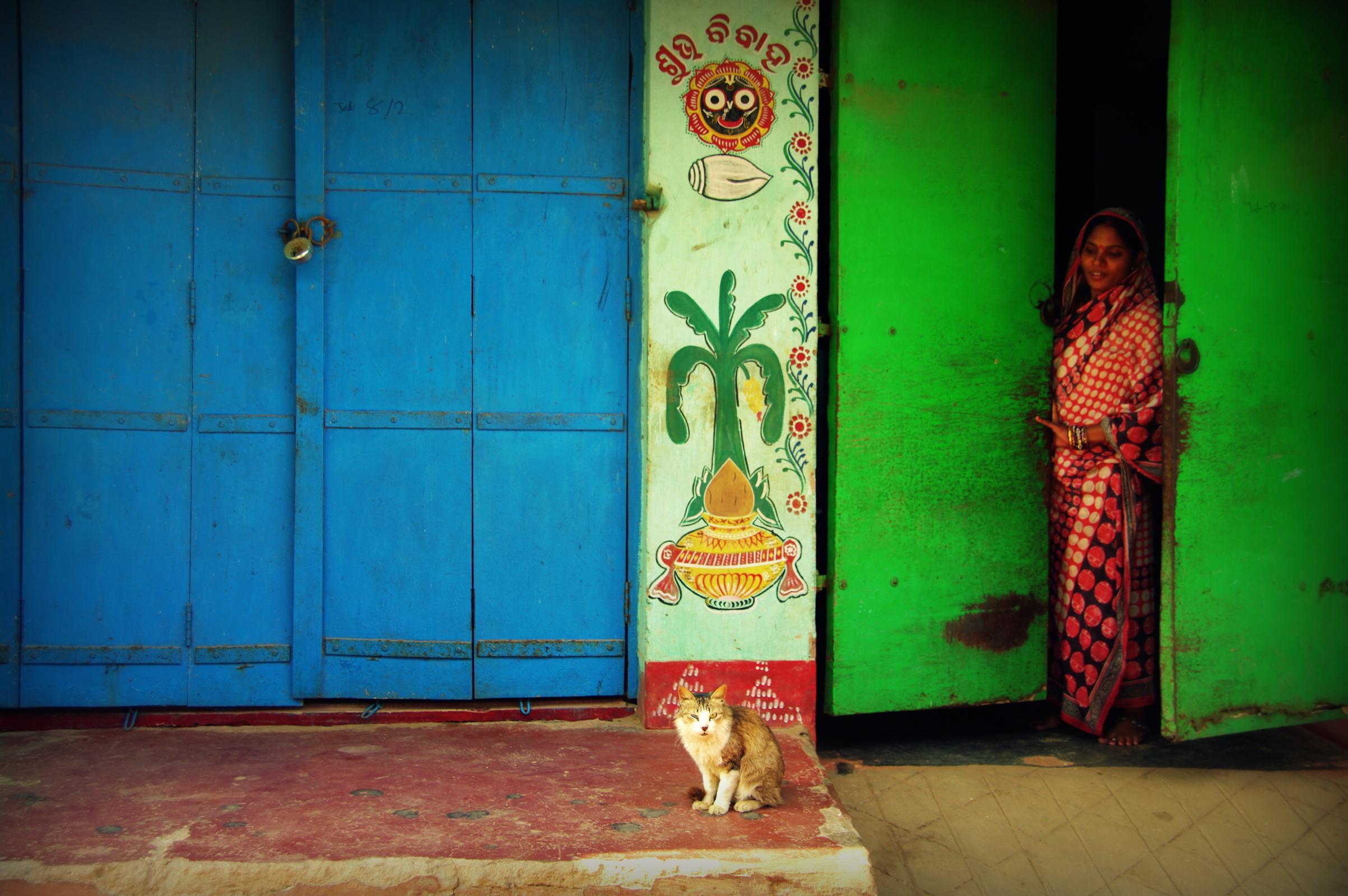 インド プリー 漁村にいる猫たち