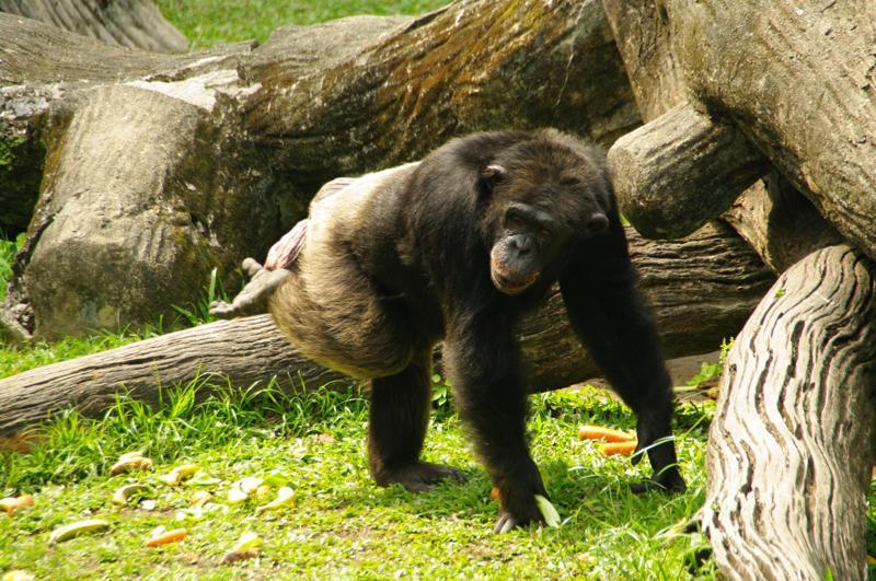 園内の檻の外で動物が普通に歩いている!?『太平(タイピン)動物園』