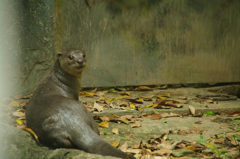 太平(タイピン)動物園 観光 面白い オススメ