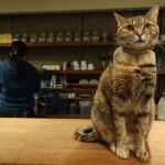 【台北】日本からの猫好きも良く訪れる人気の猫カフェ『極簡珈琲館(ミニマルカフェ)』
