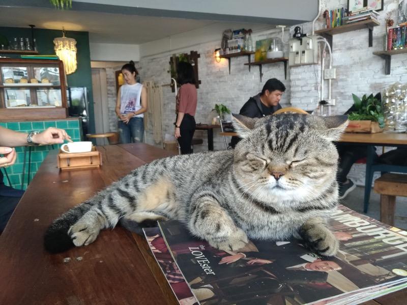 【ピッサヌローク】猫好き必見!可愛い猫がたくさんいる小洒落たカフェ「Rustic - Boho」
