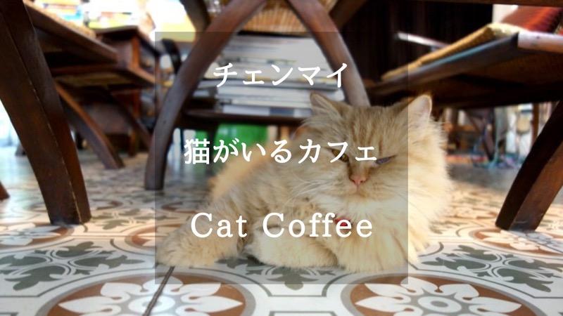 【チェンマイ】猫好きにはたまらない!猫と同じ空間でまったりできるカフェ「Coffee Cat」