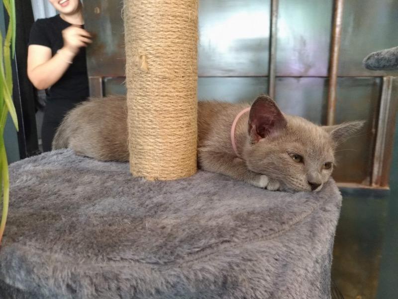 【チェンマイ】ココナッツラテが絶品!猫もいるクールなオシャレカフェ「Wiicafé - Proactive」
