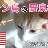 アジアねこ散歩ch You tube 野良猫動画 アジア 海外